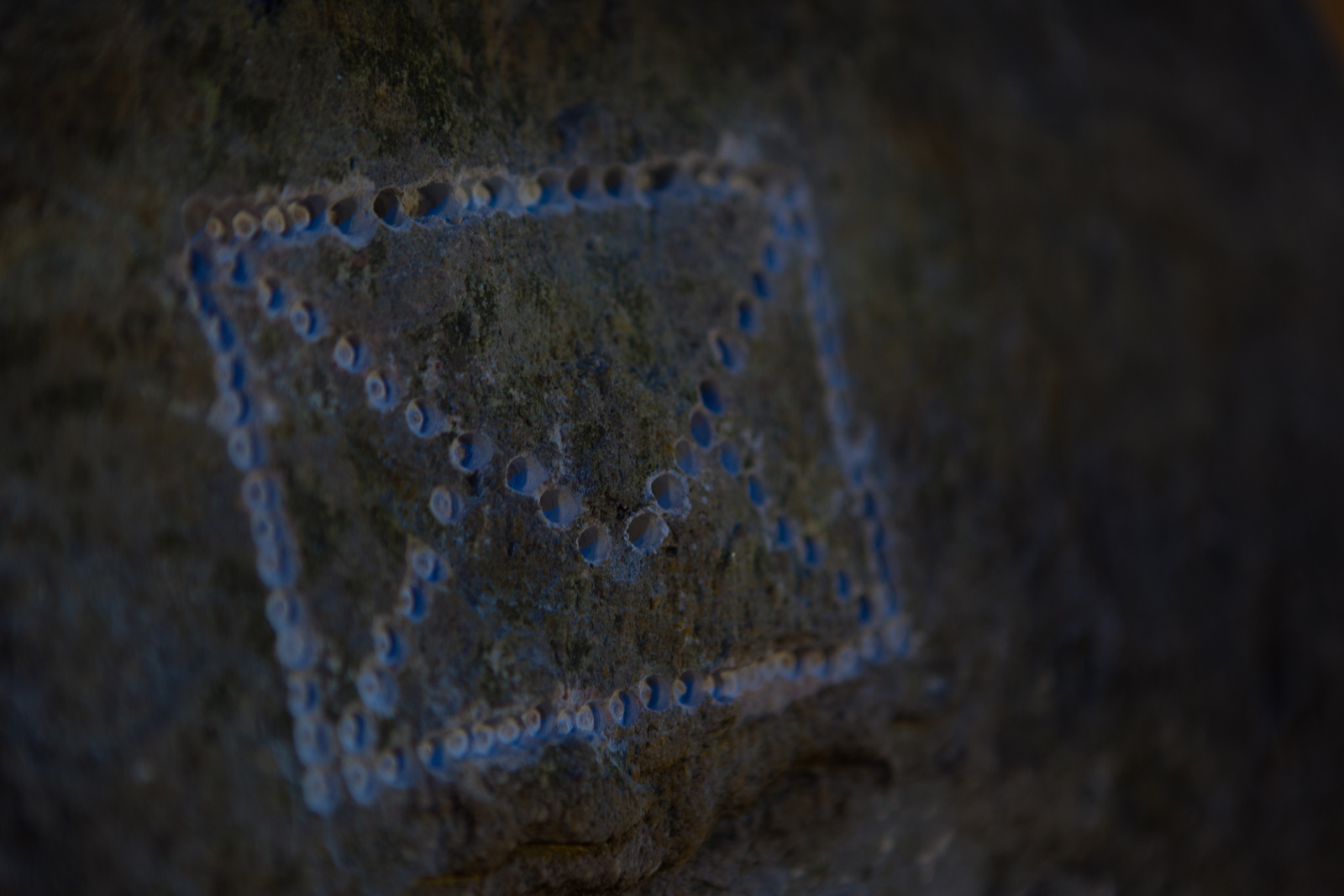 lp-petroglypomat-04